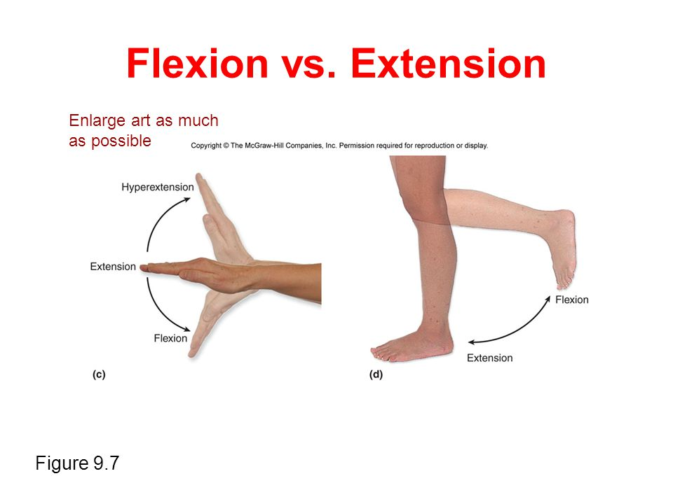 Flexion vs. Extension Enlarge art as much as possible Figure 9.7