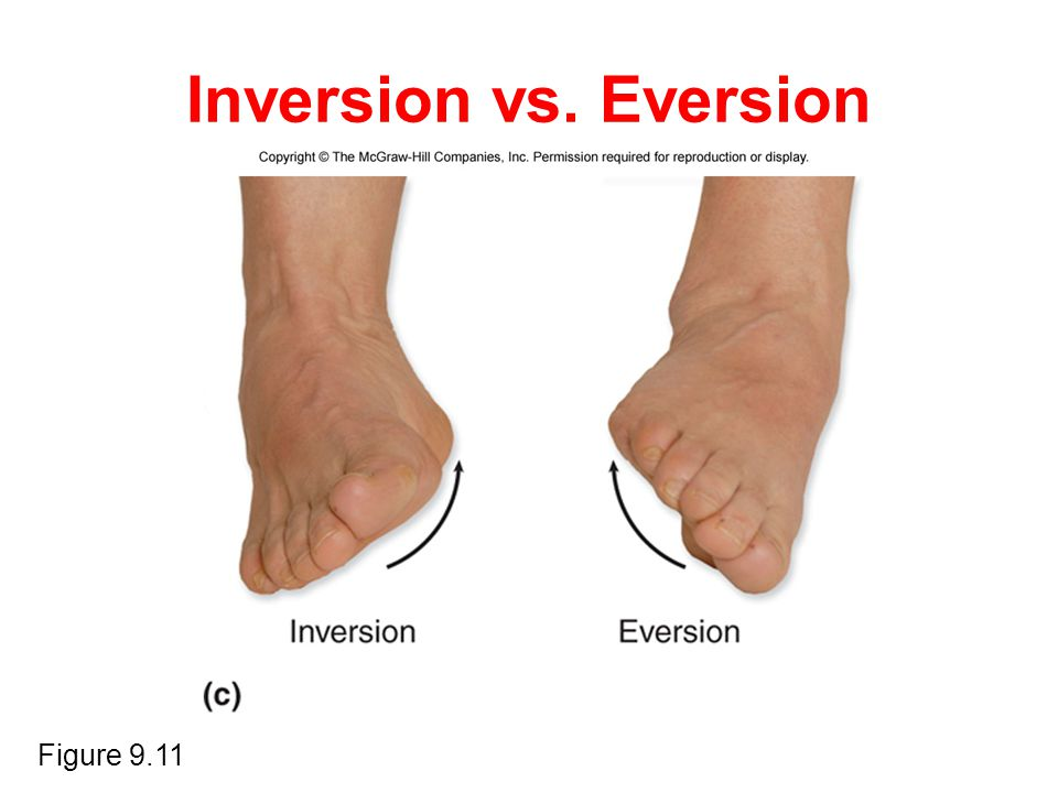 Inversion vs. Eversion Figure 9.11