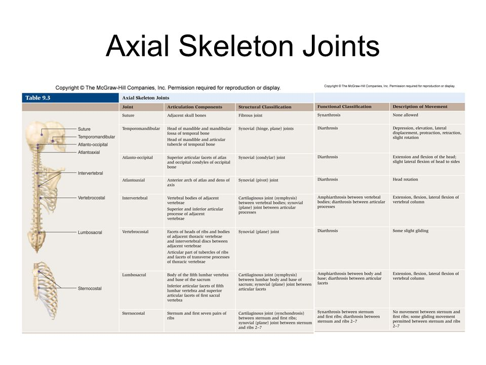 Axial Skeleton Joints
