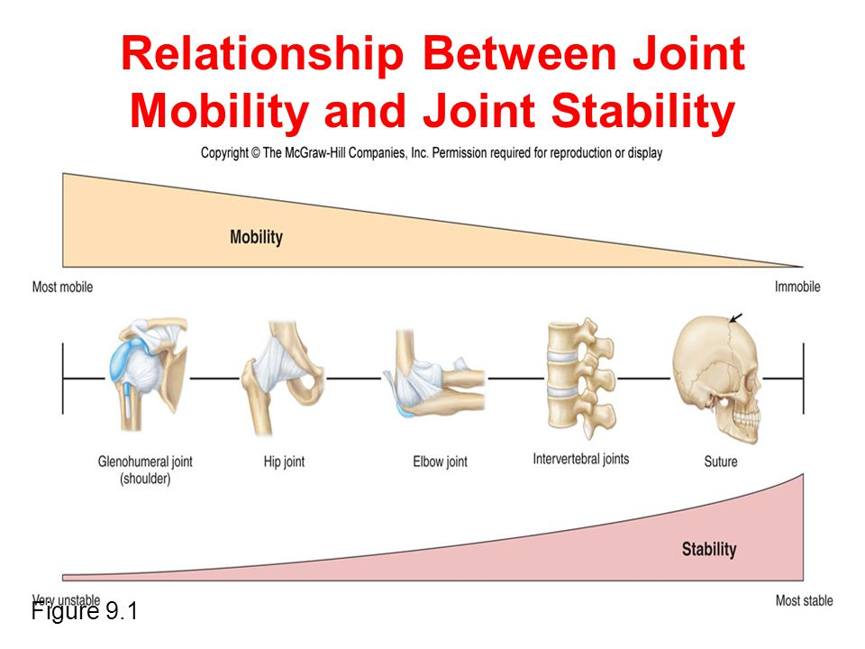 Relationship Between Joint Mobility and Joint Stability