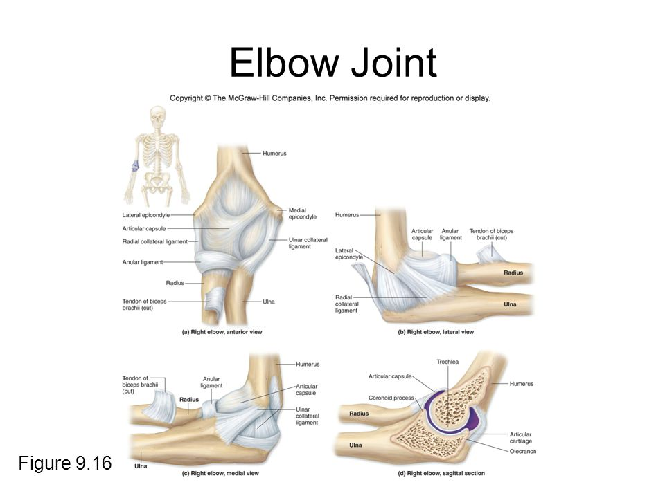 Elbow Joint Figure 9.16