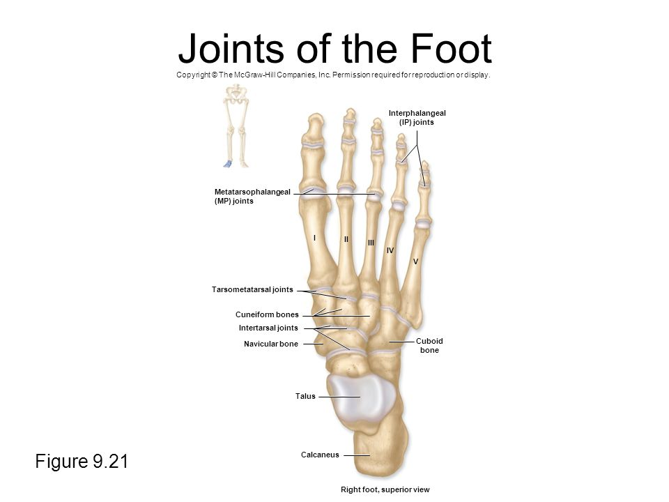 Joints of the Foot Figure 9.21