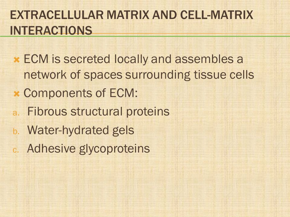 Extracellular Matrix and Cell-Matrix Interactions