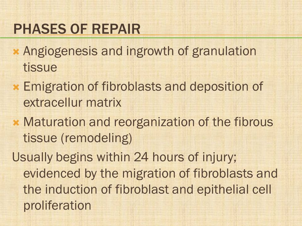 Phases of Repair Angiogenesis and ingrowth of granulation tissue