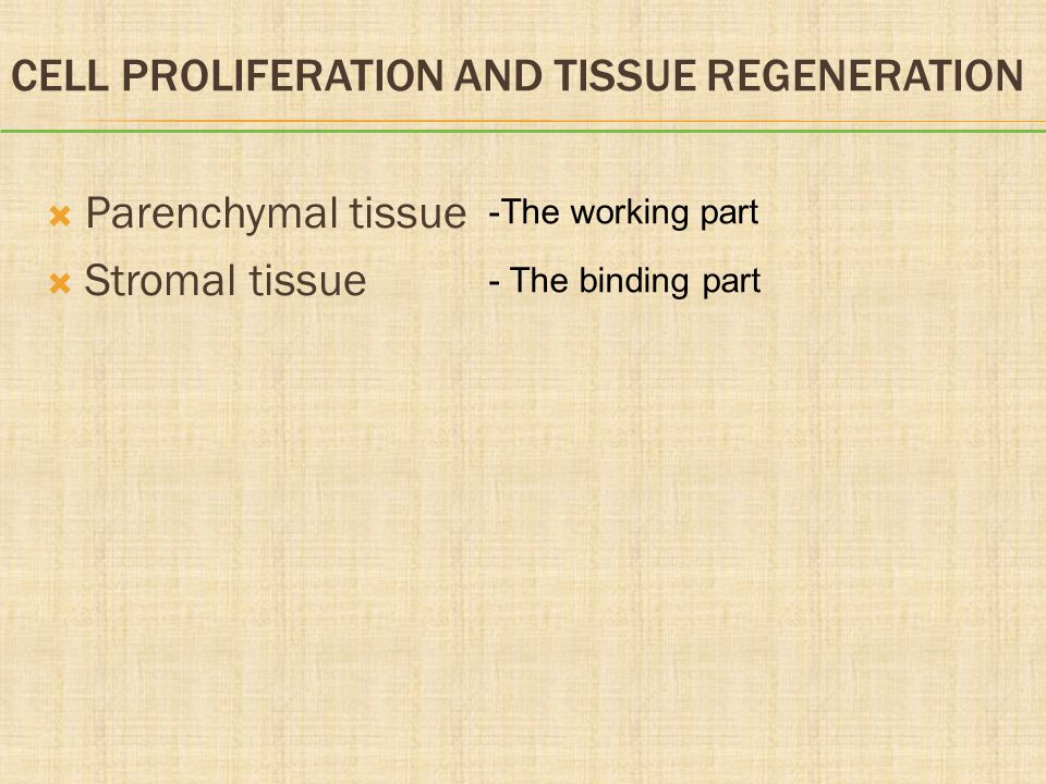 Cell Proliferation and Tissue Regeneration
