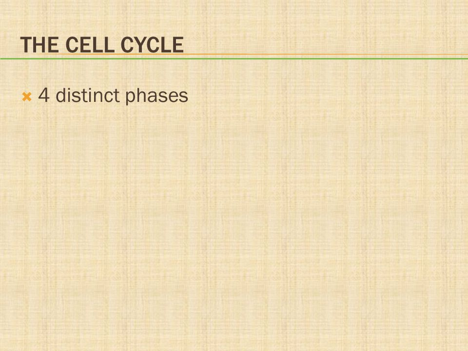 The Cell Cycle 4 distinct phases