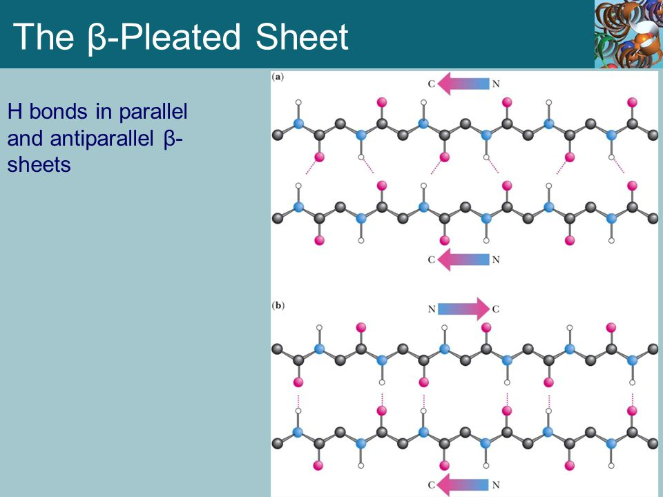 The β-Pleated Sheet H bonds in parallel and antiparallel β-sheets