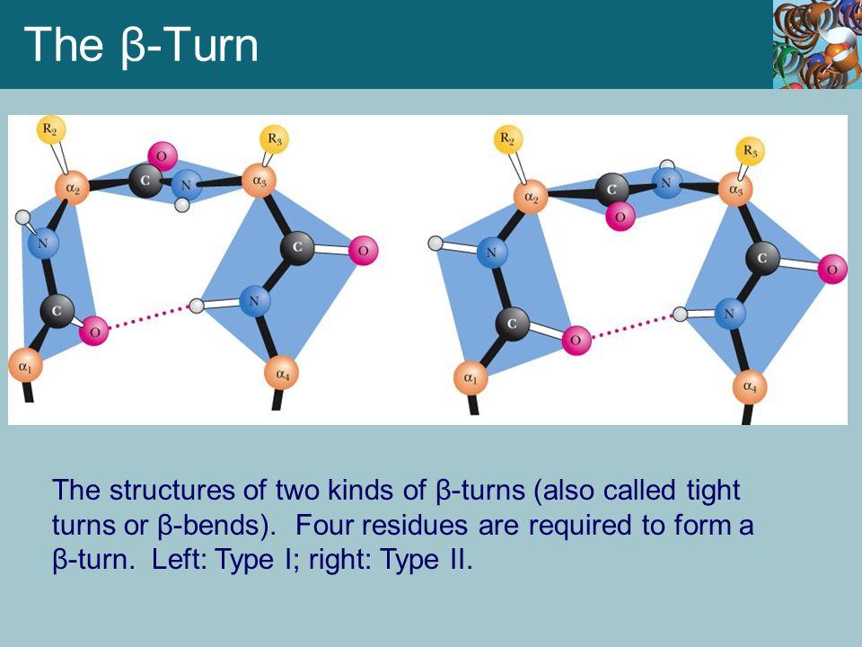 The β-Turn