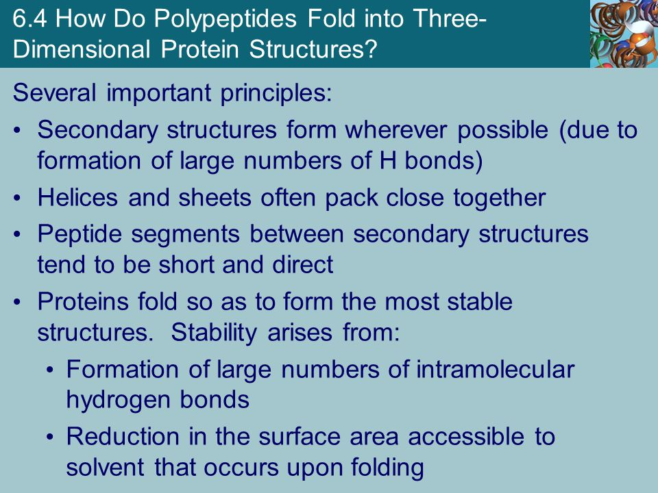 6.4 How Do Polypeptides Fold into Three-Dimensional Protein Structures