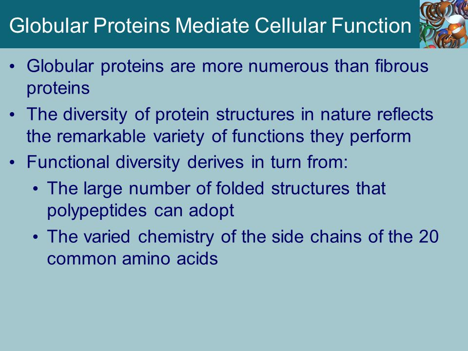 Globular Proteins Mediate Cellular Function