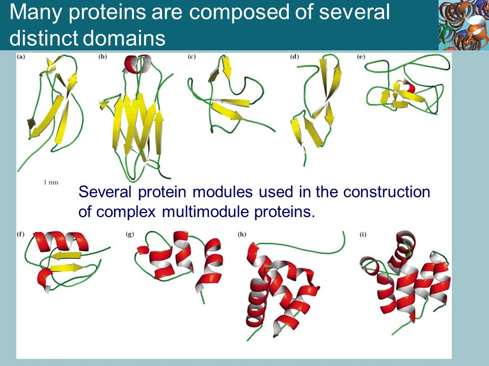 Many proteins are composed of several distinct domains