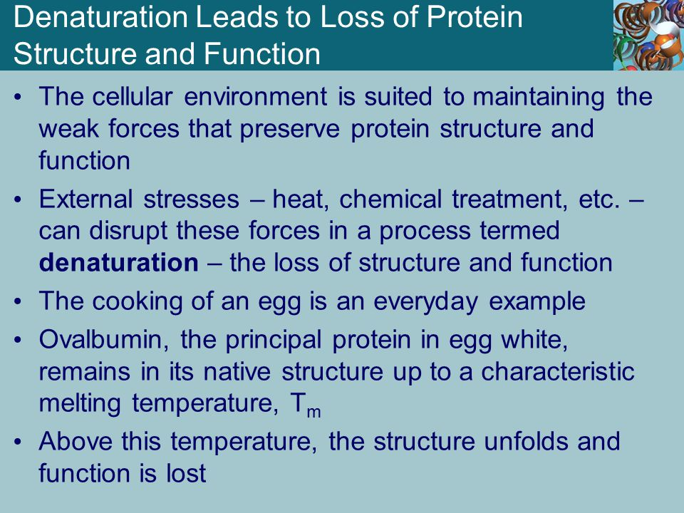 Denaturation Leads to Loss of Protein Structure and Function