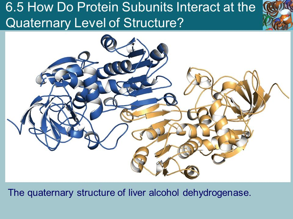 6.5 How Do Protein Subunits Interact at the Quaternary Level of Structure