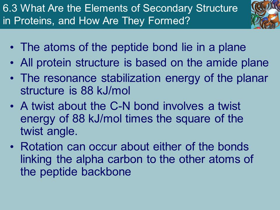 The atoms of the peptide bond lie in a plane