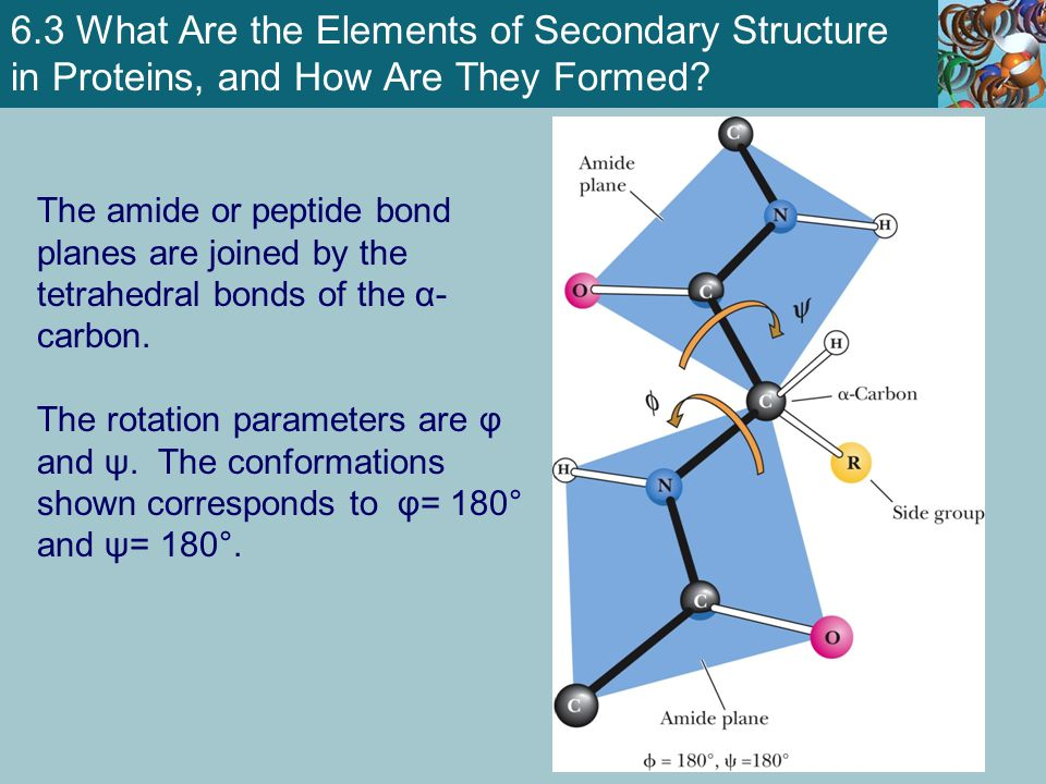 6.3 What Are the Elements of Secondary Structure in Proteins, and How Are They Formed