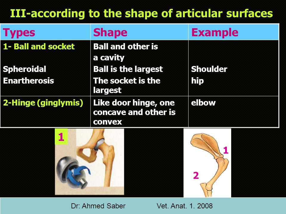 Dr: Ahmed Saber Vet. Anat. 1. 2008