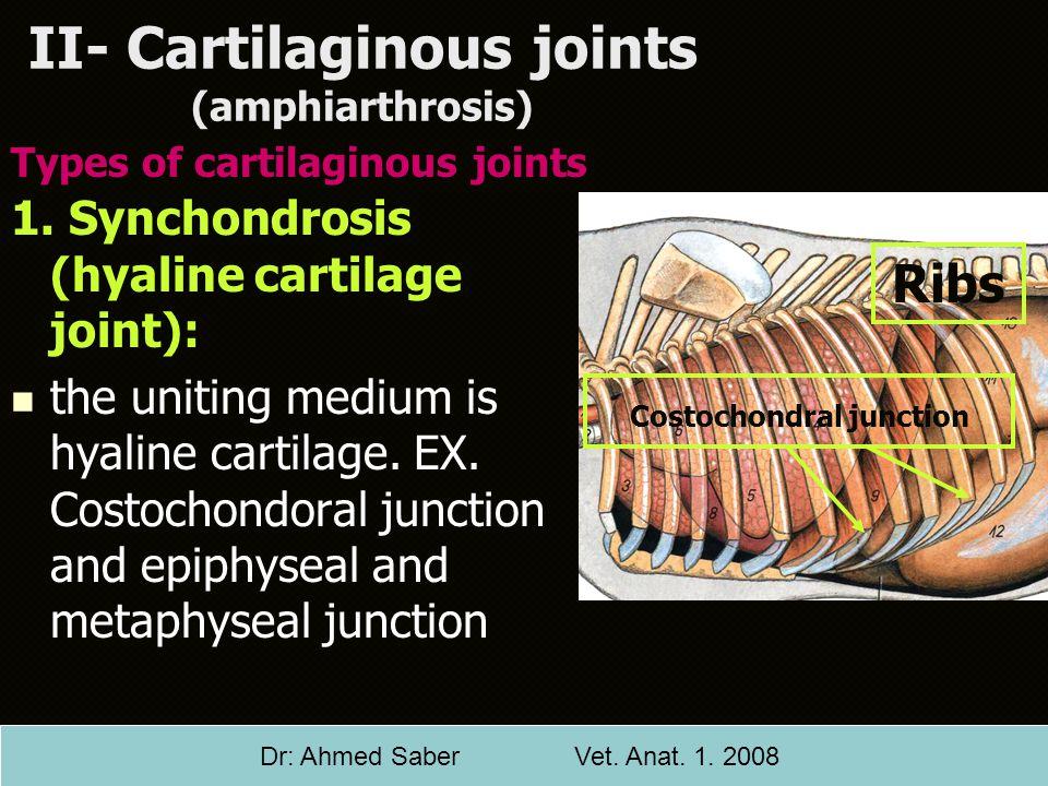 II- Cartilaginous joints (amphiarthrosis)