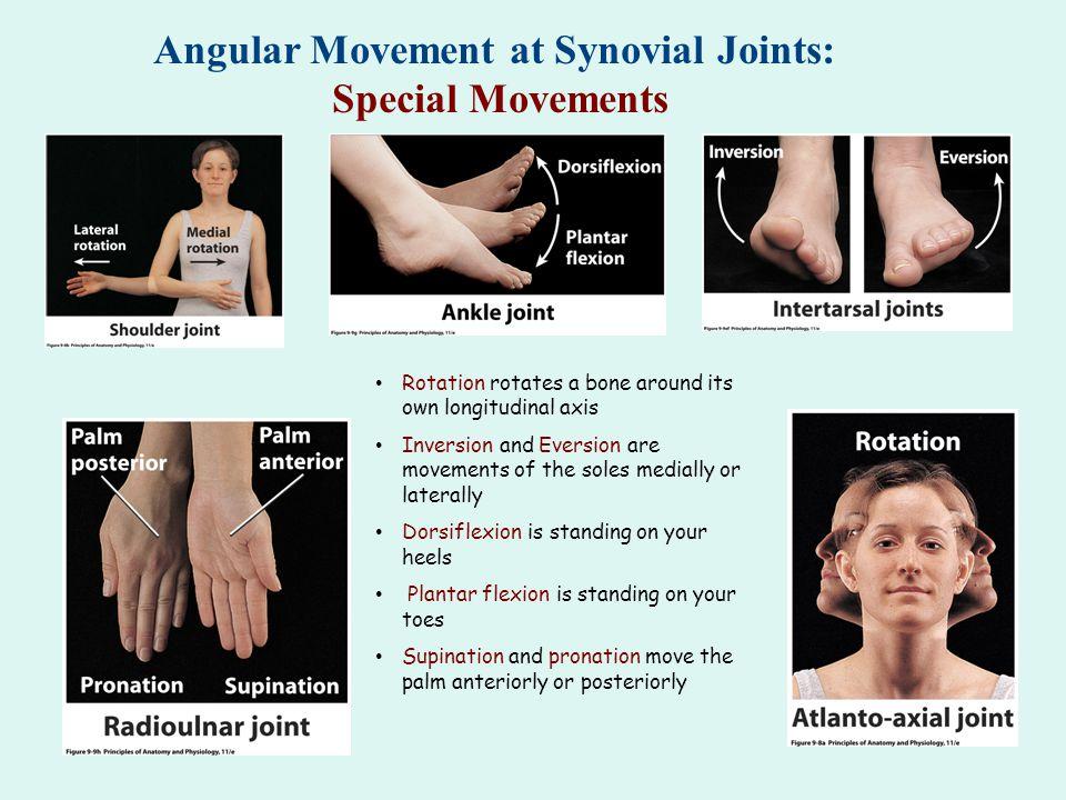 Angular Movement at Synovial Joints: