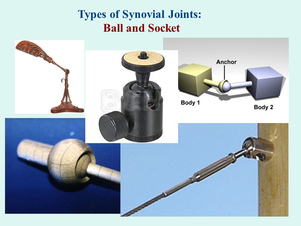 Types of Synovial Joints: