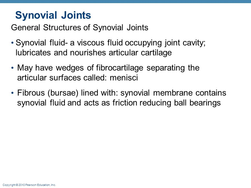 Synovial Joints General Structures of Synovial Joints