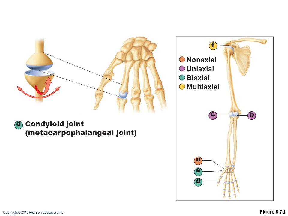 (metacarpophalangeal joint)