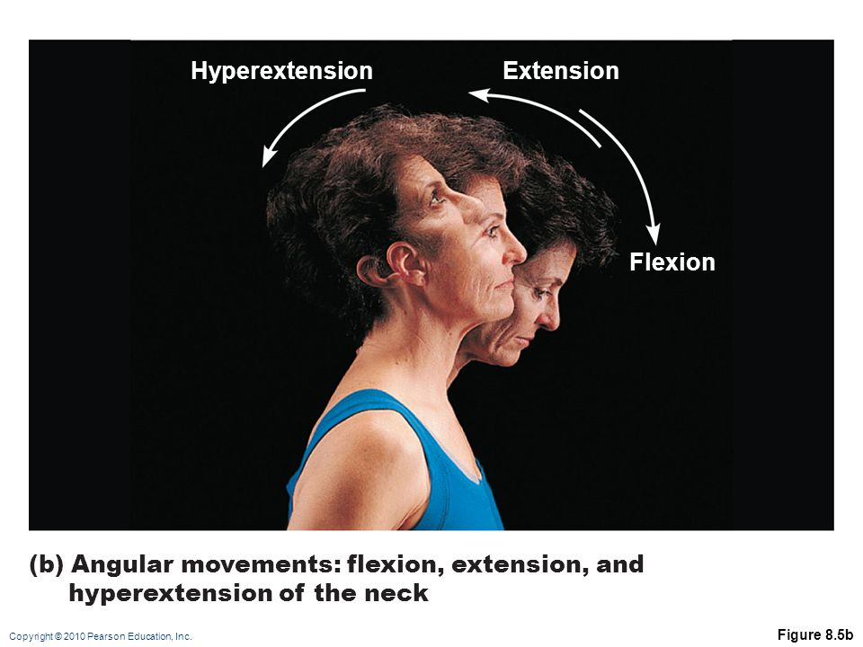 (b) Angular movements: flexion, extension, and