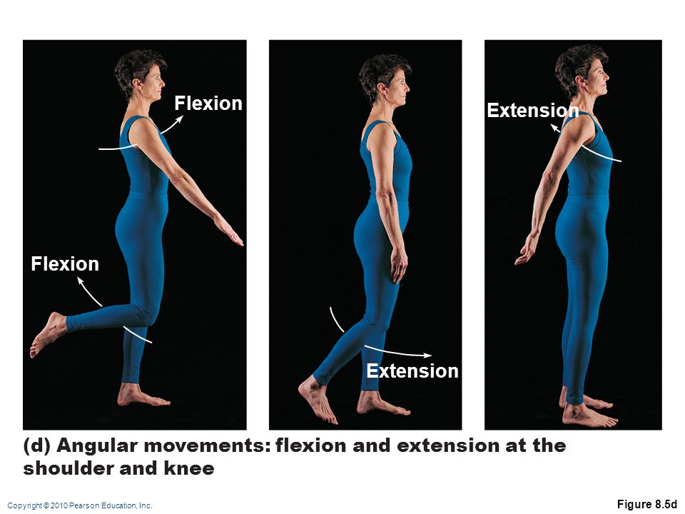 (d) Angular movements: flexion and extension at the shoulder and knee