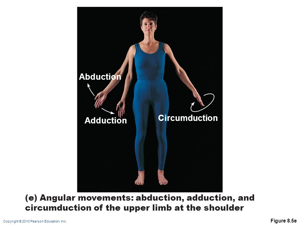 Abduction Circumduction Adduction