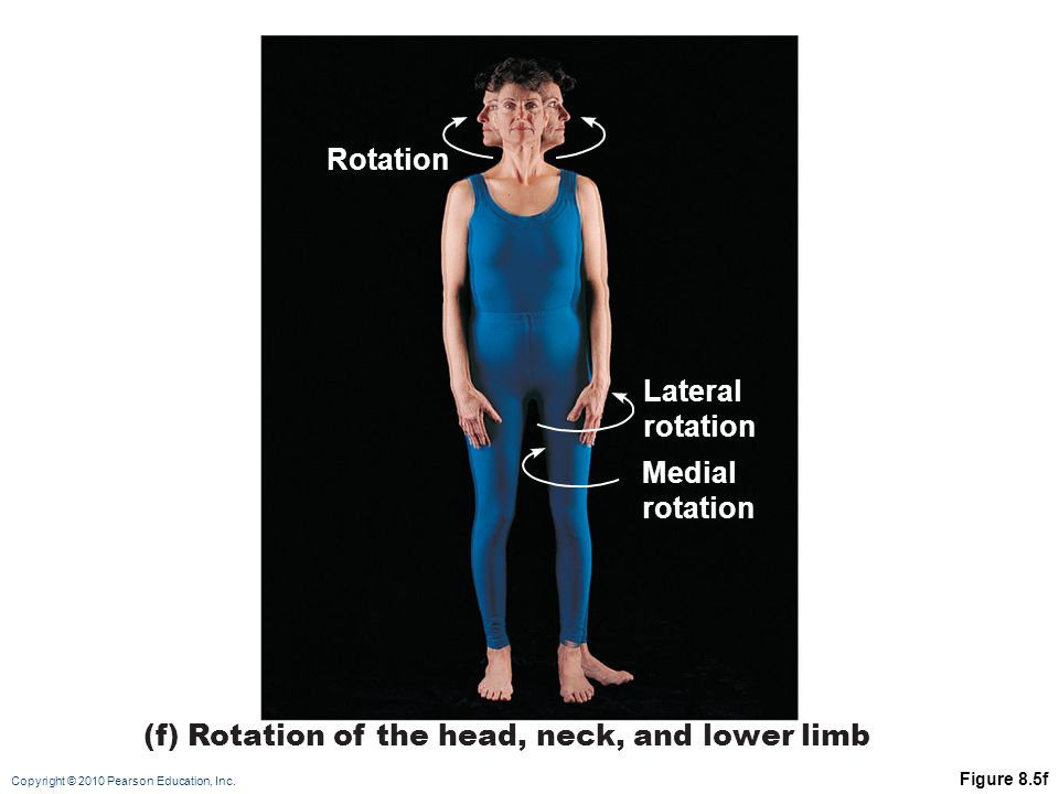 (f) Rotation of the head, neck, and lower limb