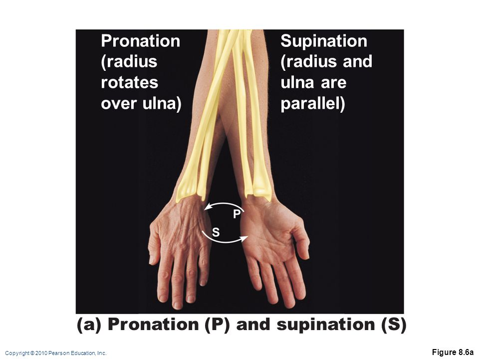 (a) Pronation (P) and supination (S)