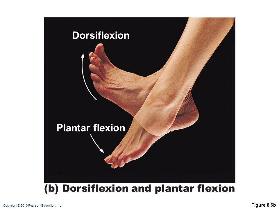 (b) Dorsiflexion and plantar flexion