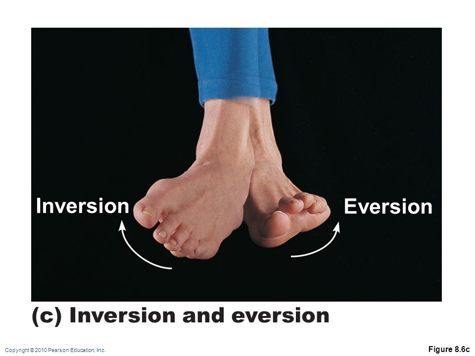 (c) Inversion and eversion