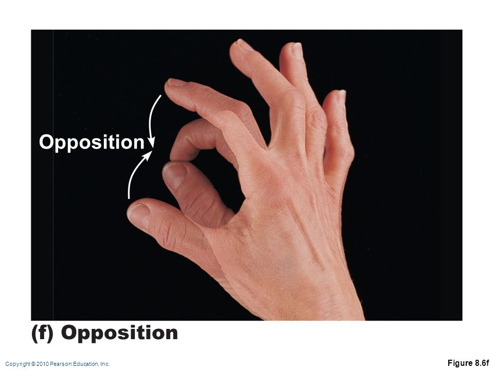 Opposition (f) Opposition Figure 8.6f