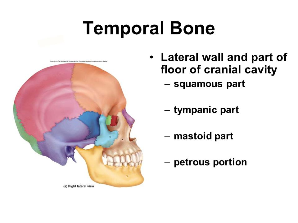 Temporal Bone Lateral wall and part of floor of cranial cavity