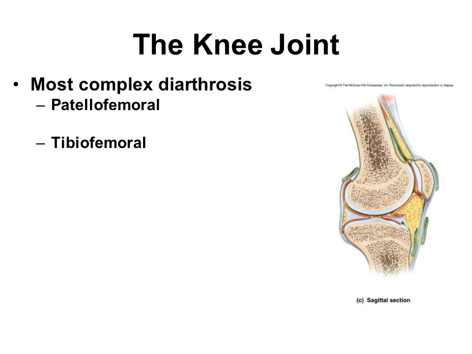 The Knee Joint Most complex diarthrosis Patellofemoral Tibiofemoral