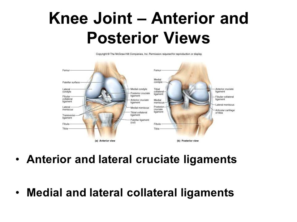 Knee Joint – Anterior and Posterior Views