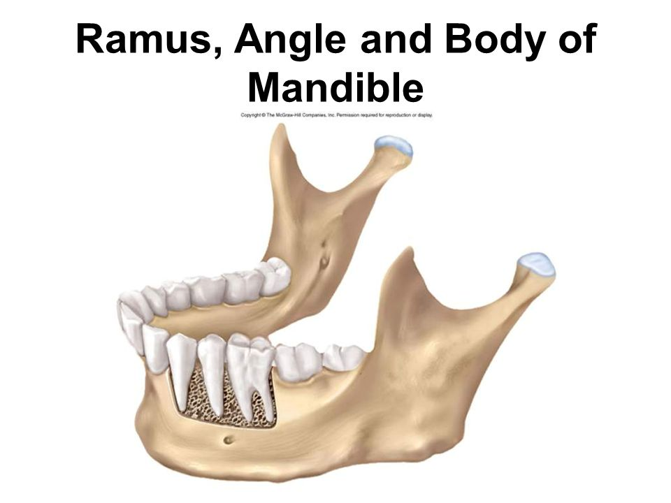 Ramus, Angle and Body of Mandible