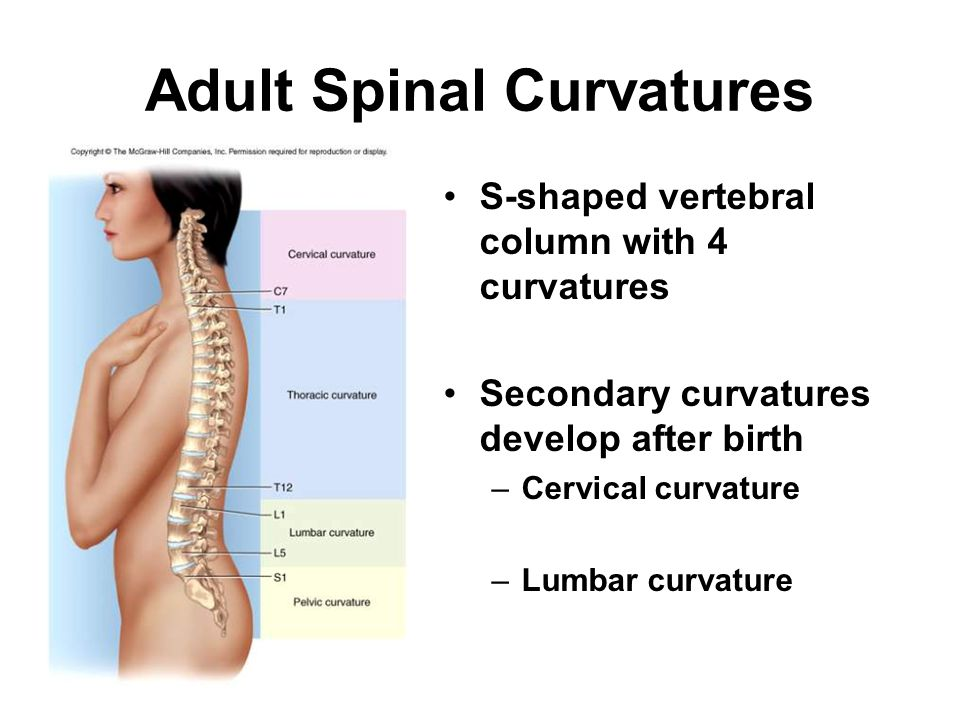 Adult Spinal Curvatures