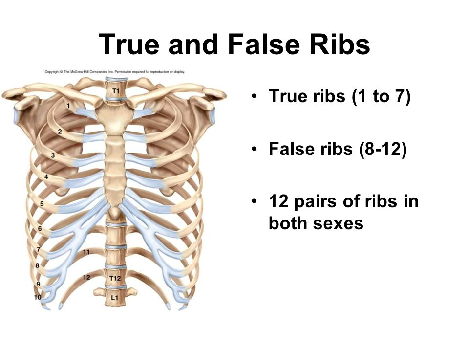 True and False Ribs True ribs (1 to 7) False ribs (8-12)