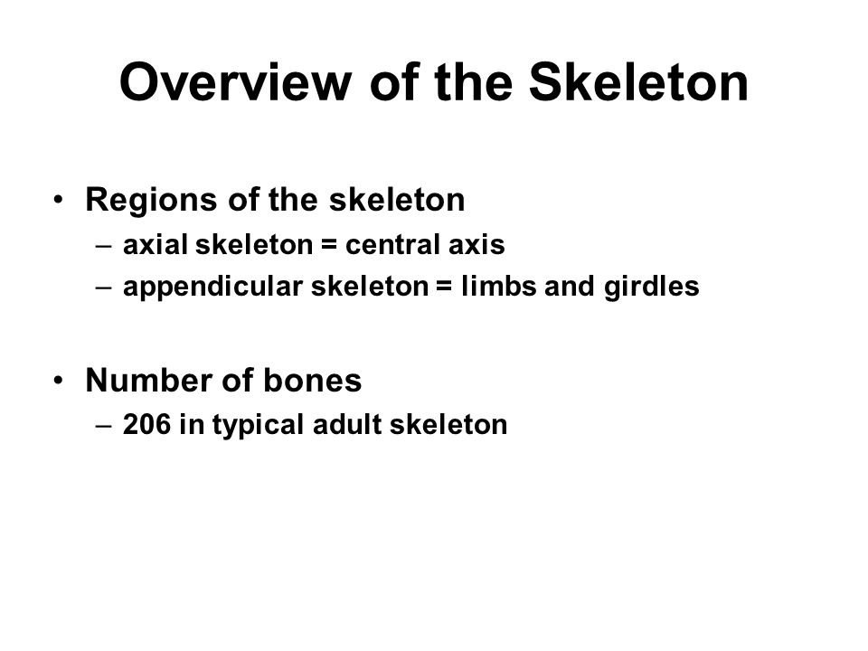 Overview of the Skeleton