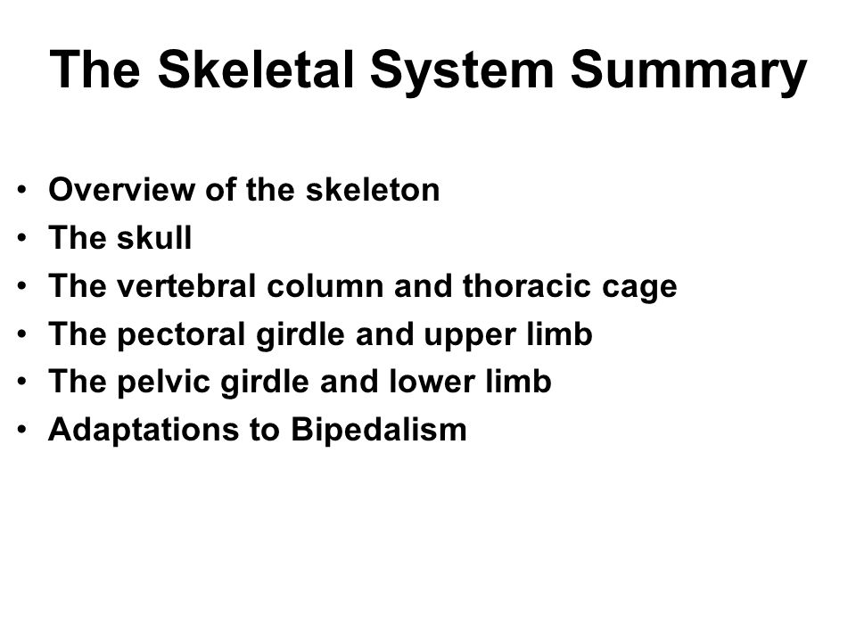 The Skeletal System Summary