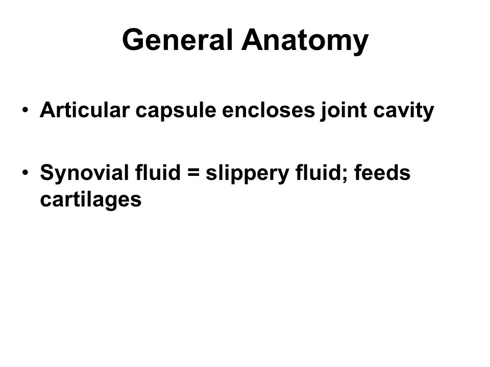 General Anatomy Articular capsule encloses joint cavity