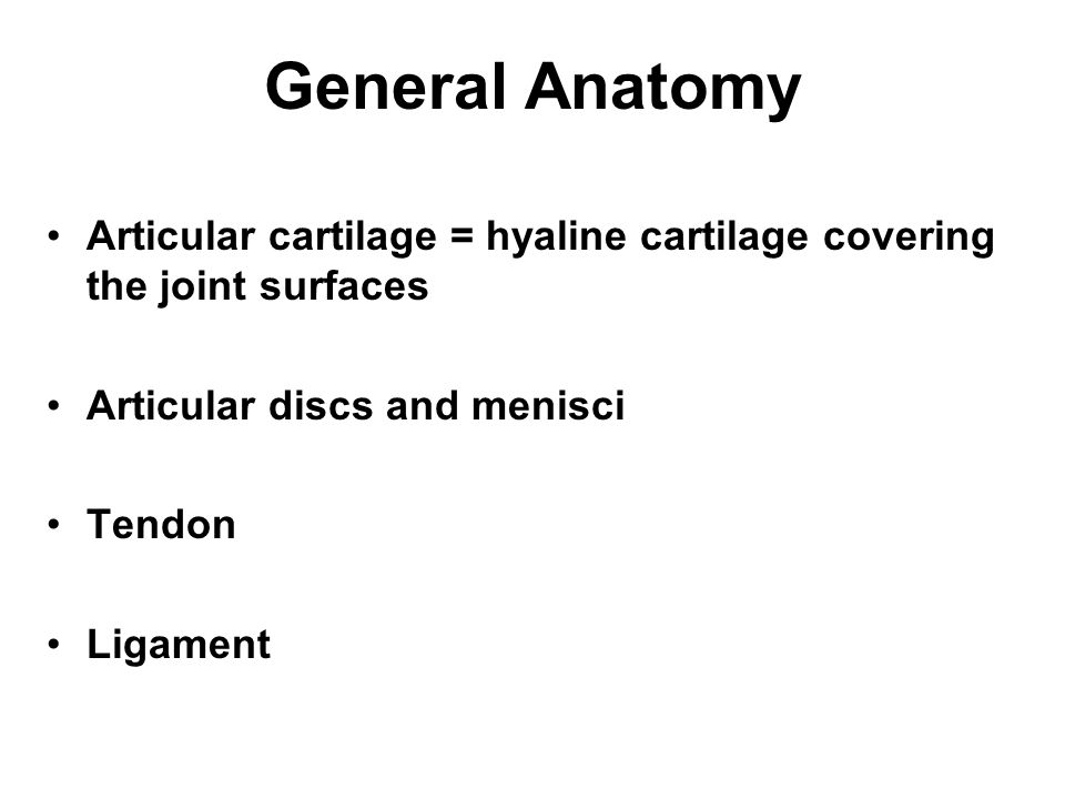 General Anatomy Articular cartilage = hyaline cartilage covering the joint surfaces. Articular discs and menisci.