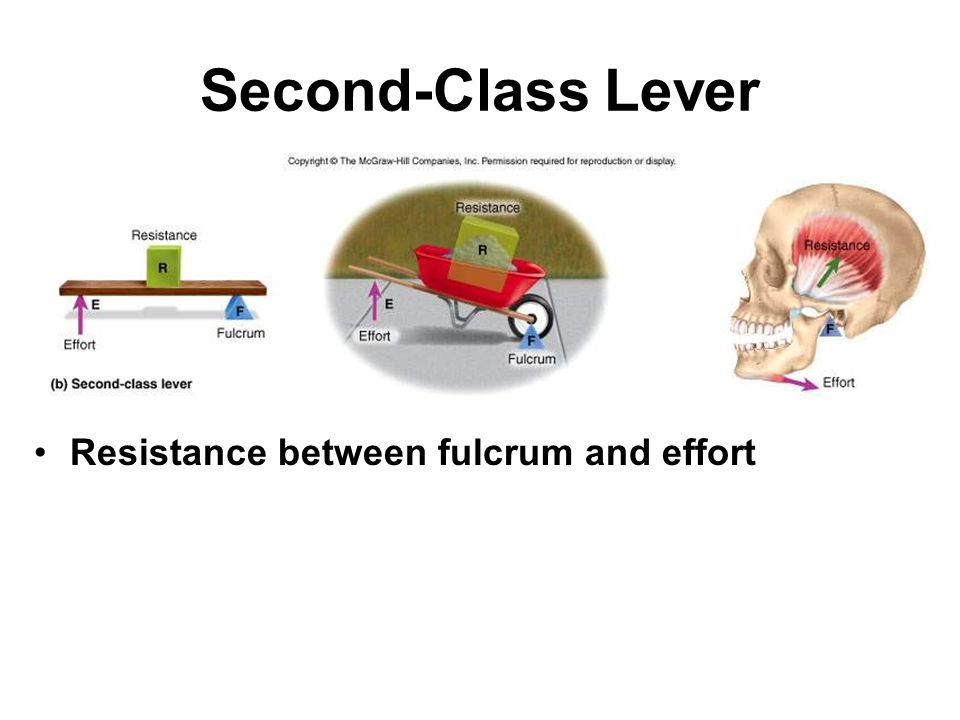 Second-Class Lever Resistance between fulcrum and effort