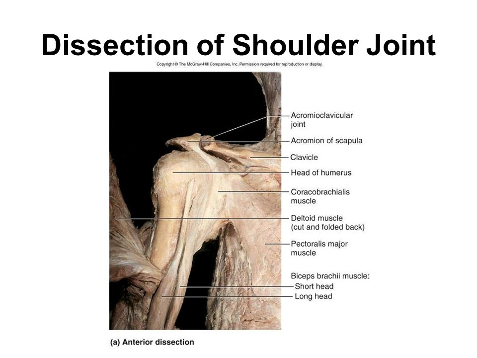 Dissection of Shoulder Joint