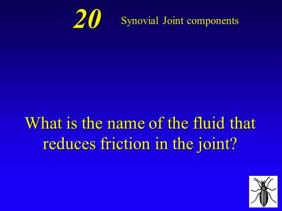 What is the name of the fluid that reduces friction in the joint