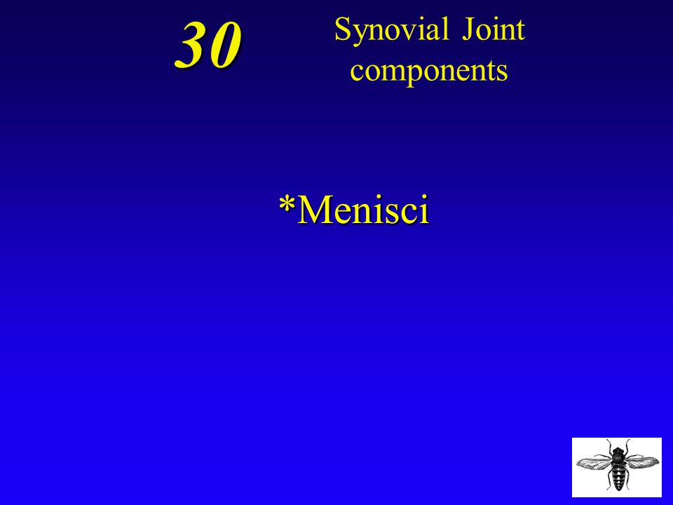 Synovial Joint components