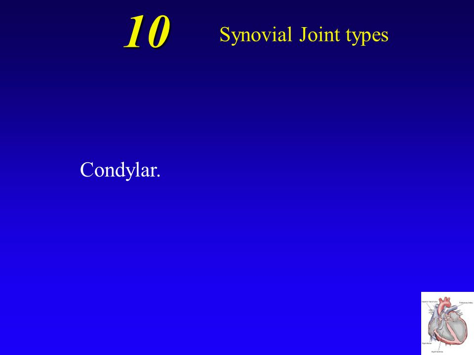 10 Synovial Joint types Condylar.