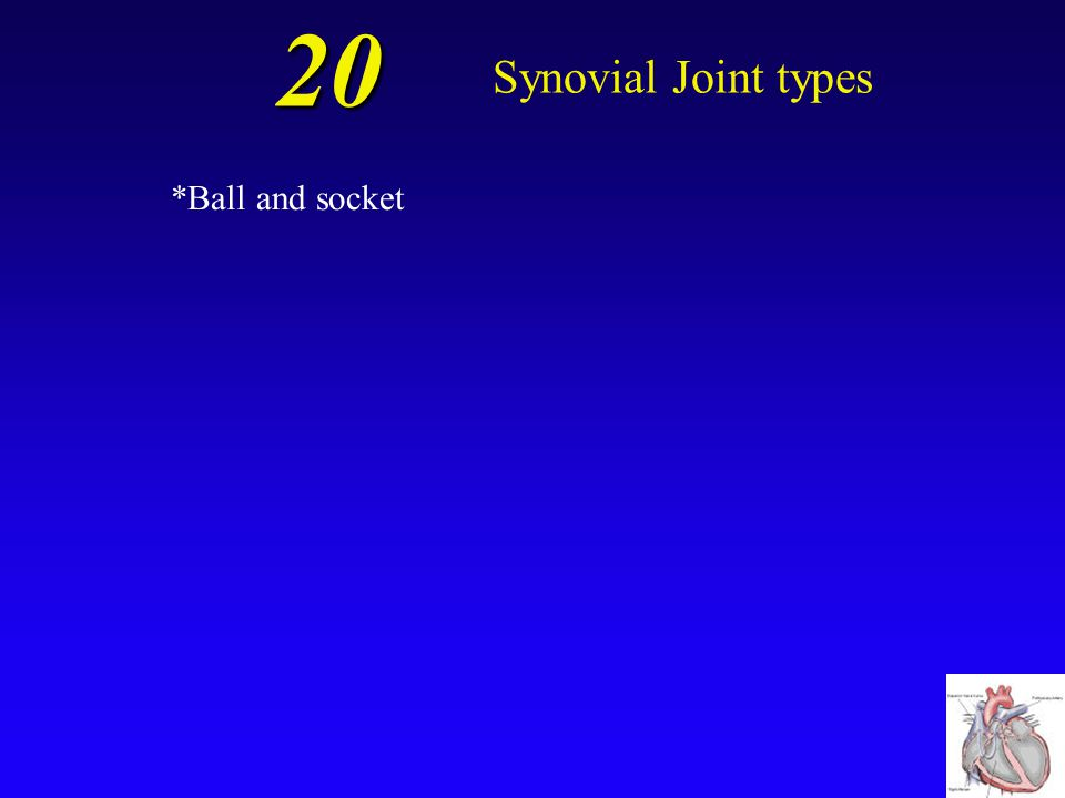 20 Synovial Joint types *Ball and socket