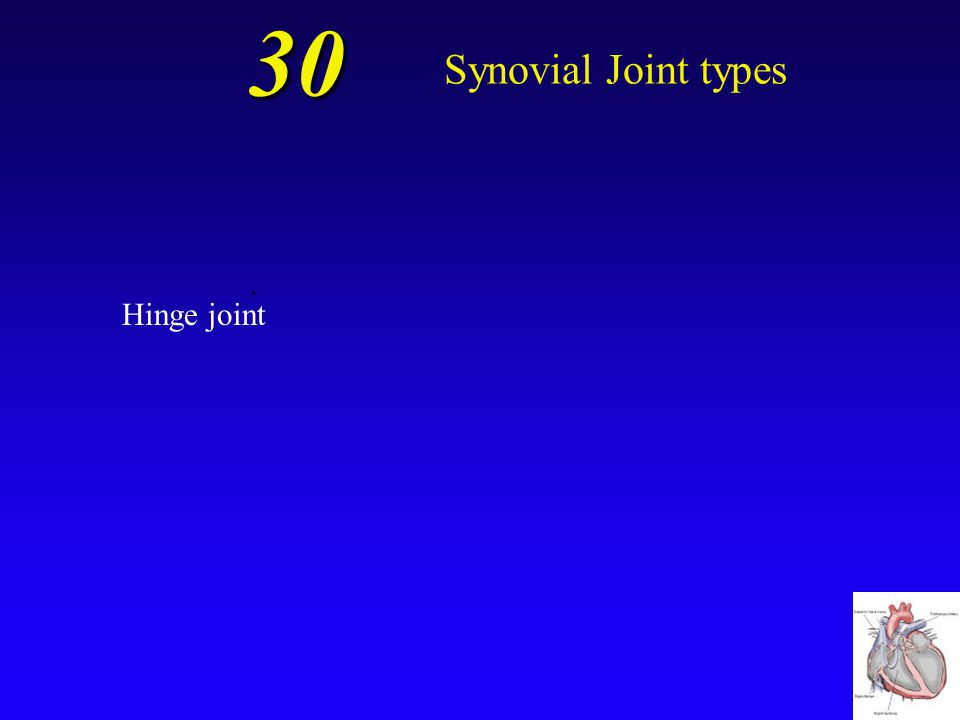 30 Synovial Joint types . Hinge joint